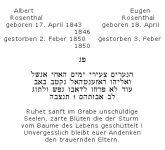 <b>Rosenthal Albert; Rosenthal Eugen</b>